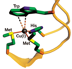 bacterial copper-trafficking protein CusF