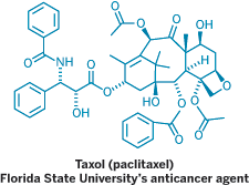Structure of Taxol