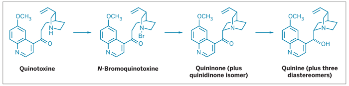 The Rabe-Kindler synthesis of quinine from quinotoxine.