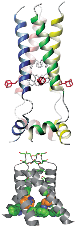 NMR structure of the closed state of M2 (top, with three bound drug molecules visible in red) and X-ray crystal structure of the channel protein's open state (bottom, not including bound drug).