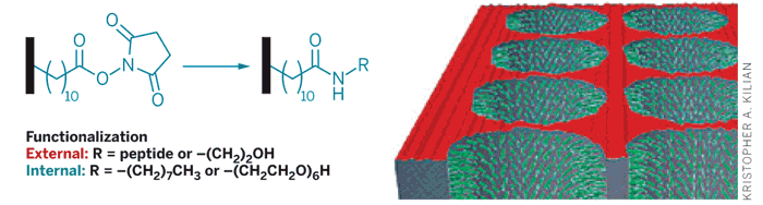 Researchers created a hydrophobic monolayer on the material's internal and external pore surfaces (black bars). Then both external (red) and internal (green) surfaces were selectively functionalized with two different moieties.