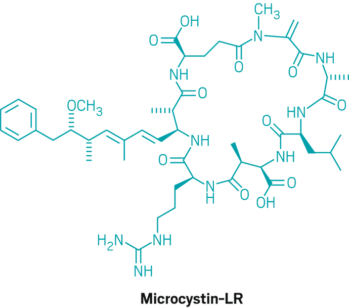 Structure of Microcystin-LR.