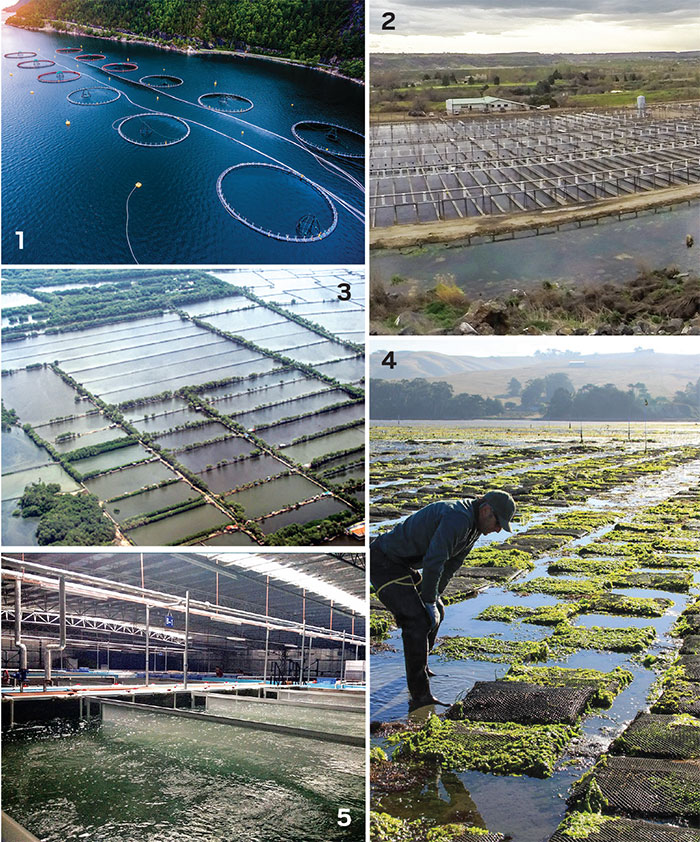 Sustaining the aquaculture revolution | May 1, 2017 Issue