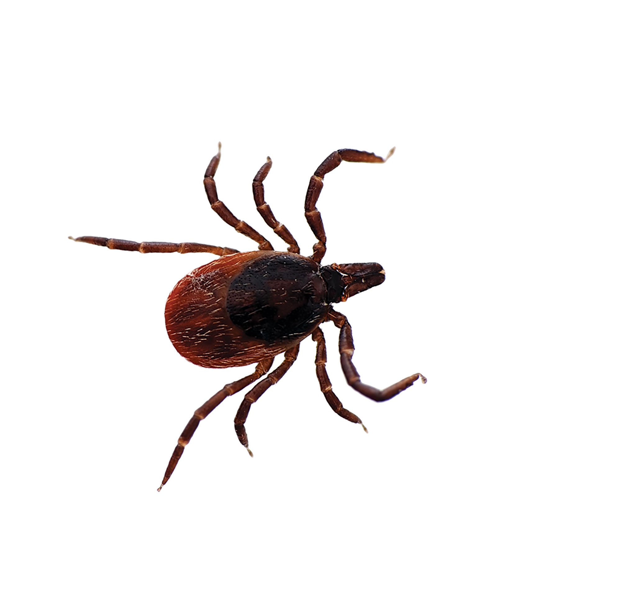 Lyme disease tests on the horizon