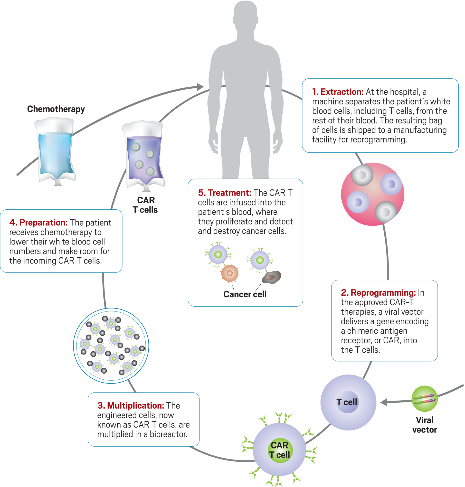 Manufacturing Challenge Leads To Death In Car T Trial White Cell Diagram