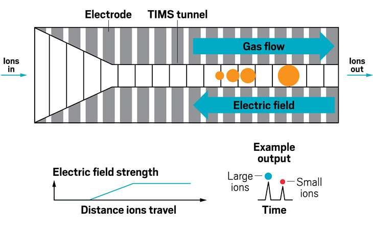 Unlike other forms of ion mobility, trapped ion mobility devices push a buffer gas in the direction that ions are traveling. They also apply an opposing electric field, which pushes the ions in the opposite direction. The force of the electric field counteracts the force of the gas flow, resulting in ions of different sizes being trapped at different places in the cell. Ramping down the electric field releases the ions, with larger ions eluting first, a reversal from drift tubes and traveling wave devices.