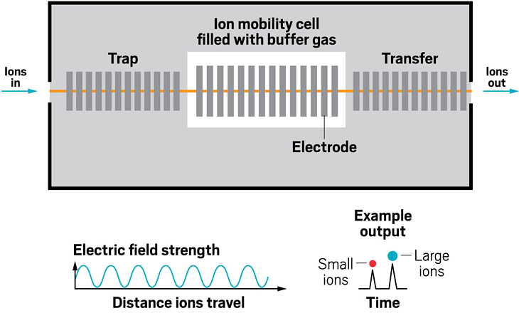 Although homemade drift tubes were the first type of ion mobility device to be combined with mass spectrometry in labs, they weren't the first to be offered by a major mass spec manufacturer. That honor goes to traveling wave ion mobility spectrometry devices. As in other forms of ion mobility, in TWIMS, movement of ions is impeded by collisions with a buffer gas. Here, though, voltage pulses are applied along a gas-filled cell to generate traveling waves: the repeating electric fields push ions through the device, with smaller ions eluting first, similar to the drift tube. The use of traveling waves enables the device to operate at low voltages.